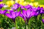 20 marca - magiczne powitanie wiosny